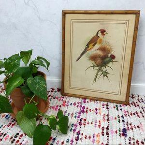 Vintage 60s Finch Bird Lithograph Framed Print